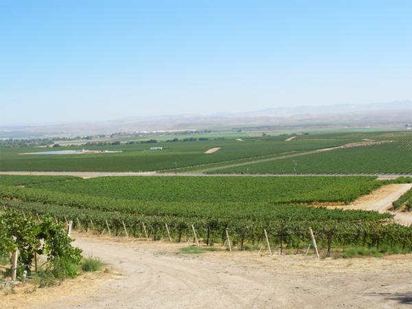 カリフォルニアワインカントリーの旅 サン・バーナビ・ヴィンヤード San Bernabe Vineyard