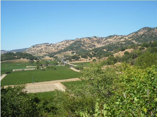 カリフォルニアワインカントリーの旅7