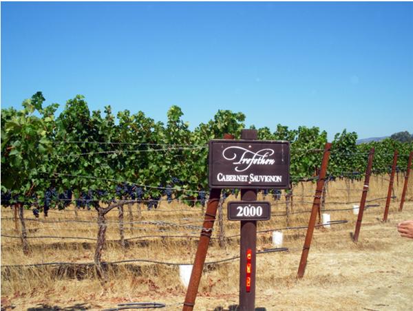 カリフォルニアワインカントリーの旅 トレフェッセン ファミリー ヴィンヤード