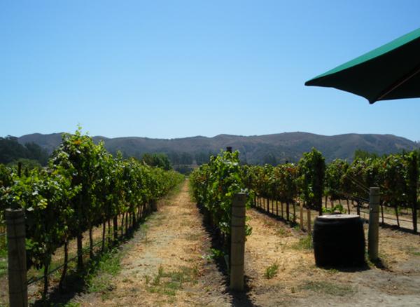 サンタ バーバラ編2 メルヴィル ヴィンヤーズ & ワイナリー Melville Vineyards & Winery