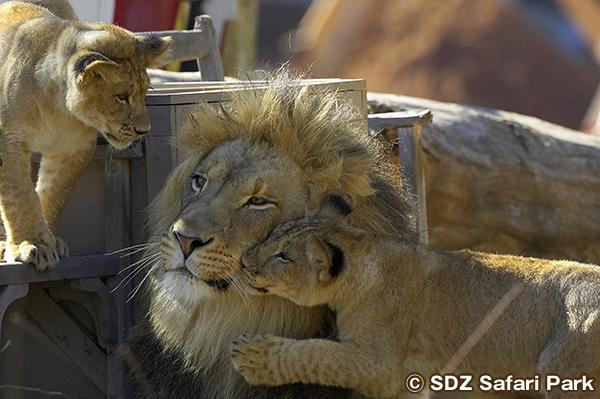 ワイルドアニマル・パーク Wild Animal Park