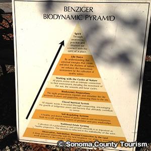 ベンジガー ファミリー ワイナリー Benziger Family Winery