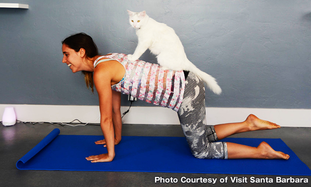 キャット セラピー Cat Therapy
