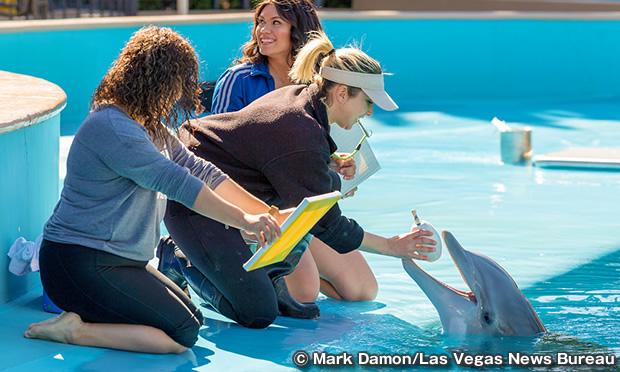ドルフィン ハビタット Dolphin Habitat