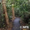 ガンボ・リンボー・トレイル Gumbo Limbo Trail