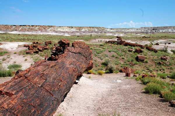 化石の森国立公園