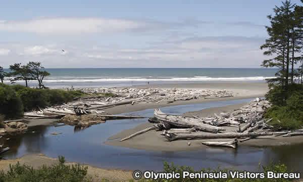カラロック ビーチ Kalaloch Beach
