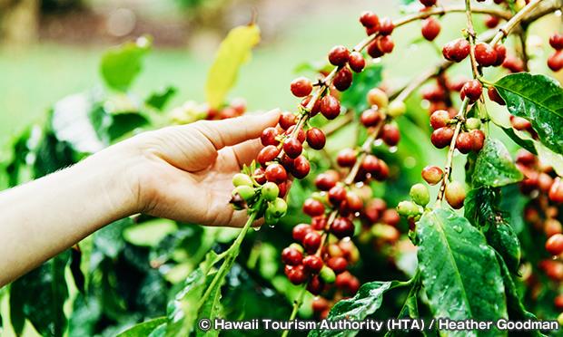コナ・コーヒーベルト Kona Coffee Belt
