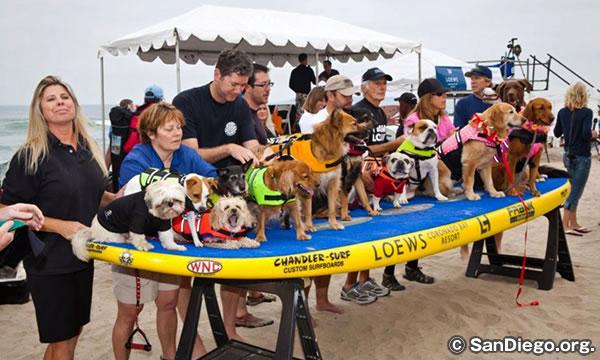 サーフ ドッグ イベント SURF DOG EVENTS