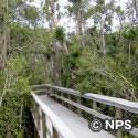 マホガニー・ハンモック・トレイル Mahogany Hammock Trail