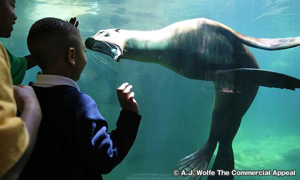 メンフィス動物園 Memphis Zoo