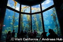 モントレー・ベイ水族館 Monterey Bay Aquarium
