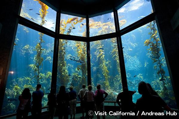 モントレー湾水族館