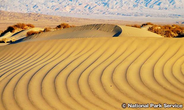 モスキートフラット砂丘を自由に散策
