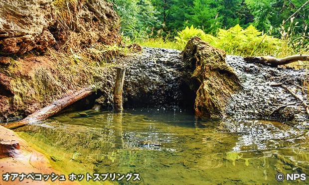 オアナペコッシュ・ホットスプリングス Ohanapecosh Hot Springs