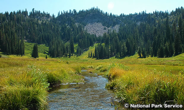 パラダイスメドウ トレイル Paradise Meadows Trail