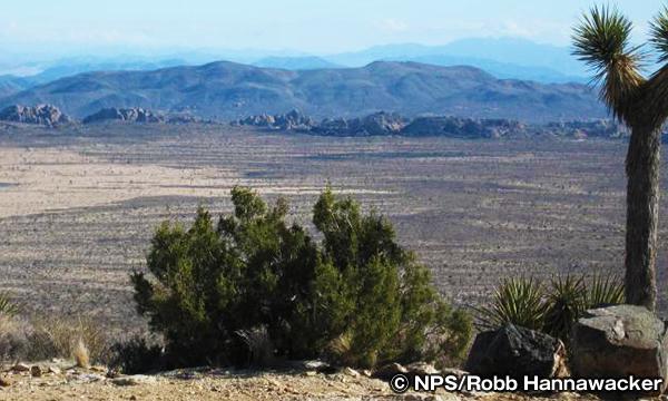 ライアン・マウンテン・トレイル Ryan Mountain Trail