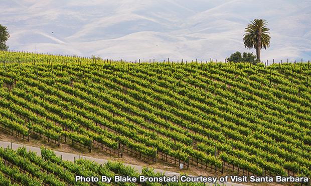 サンタマリア バレー ワイントロリー Santa Maria Valley WineTrolley