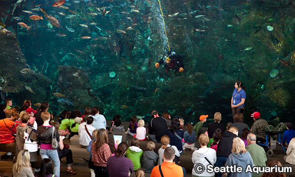 シアトル水族館 Seattle Aquarium Window On Washington Waters