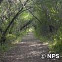 スネーク・バイト・トレイル Snake Bight Trail