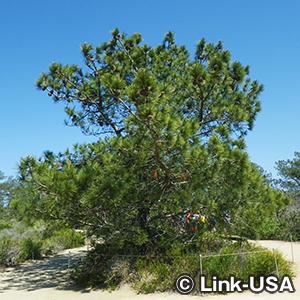 トーリー パインズ ステート 保護区 Torrey Pines State Reserve