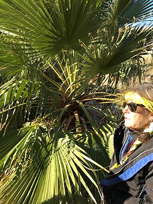 ベテランのガイドさんが、詳しくパームツリーやまわりの植物について解説してくれます。