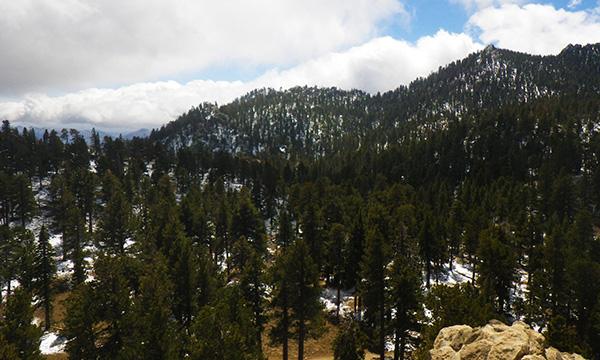 サンジャシント山州立公園(Mount San Jacinto State Park)