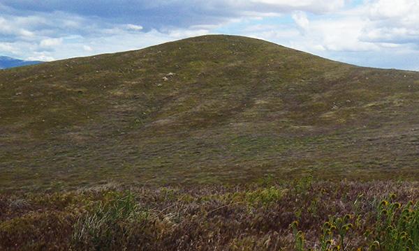 アンテロープ・バレー・カリフォルニア・ポピー保護区