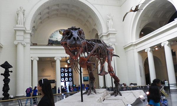 フィールド自然史博物館