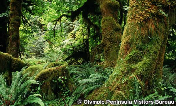 ホー レインフォレスト Hoh Rainforest