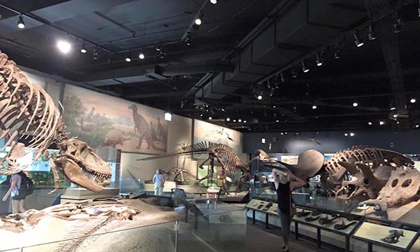 恐竜の骨格のコレクション