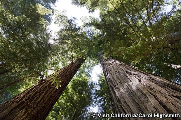 トールツリーズ・グローブ Tall trees Globe