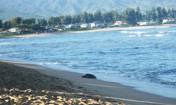 ハレイワ・アリイ・ビーチ・パーク Haleiwa Alii Beach Park
