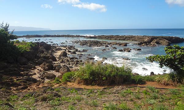 シャークス・コーブ Shark's Cove