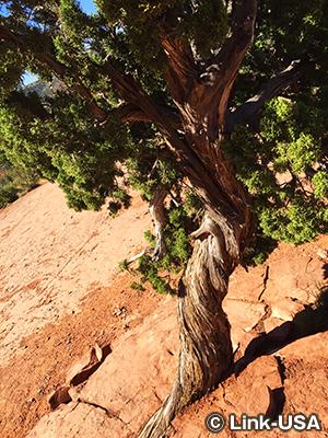 ボルテックスでねじれている木