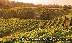 ソノマバレー Sonoma Valley