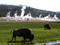 ノリス・ガイザー・ベイズン Norris Geyser Basin